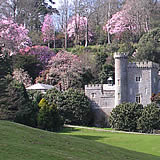 The gardens at Caerhays - open to visitors February to May